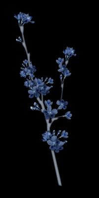 Branche Fleurs Bleu Foncé