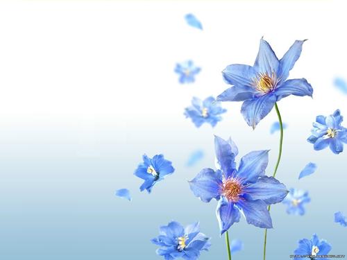 Fond Bleuté avec fleurs bleu..