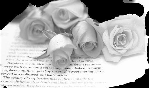 Roses Blanches sepié