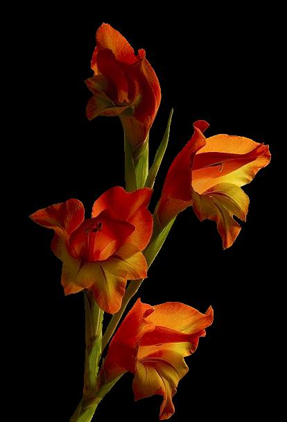Branche de Fleurs Orangé