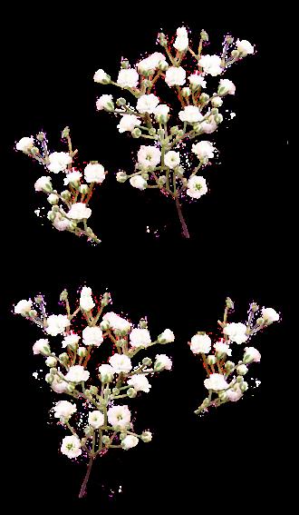 Branches de Fleurs Blanches